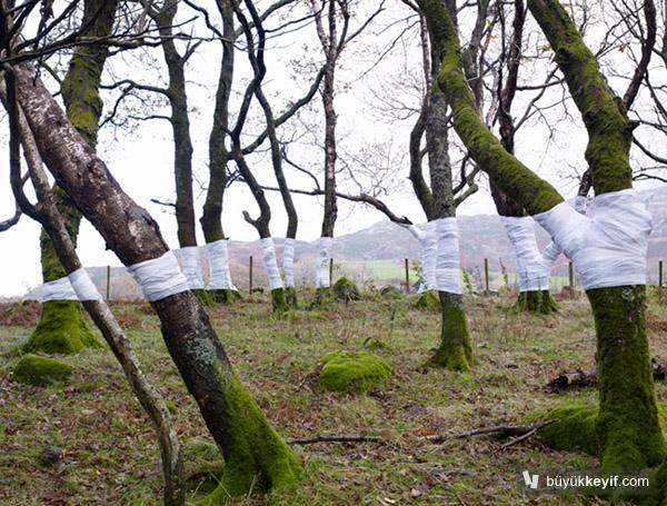 Zander Olsen_Tree, Line_001
