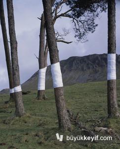Zander Olsen_Tree, Line_002