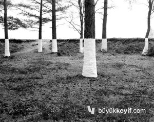 Zander Olsen_Tree, Line_009