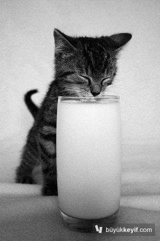 kedi-raki