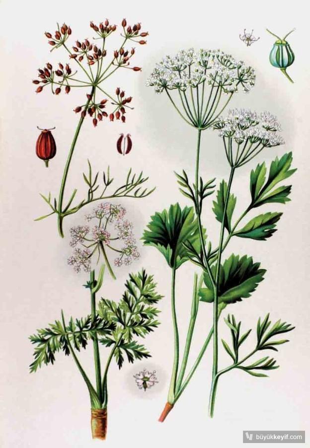 ANASON-Botanik