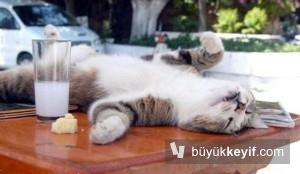 raki kedi