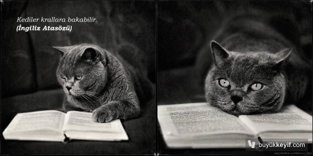 kedilerkrallarabakabilir