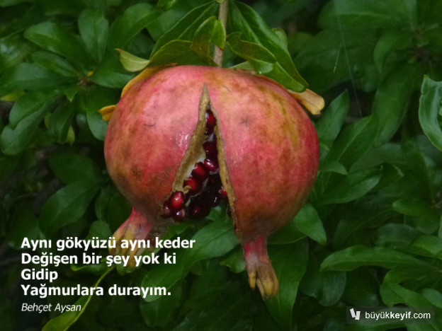 bahcetAysan